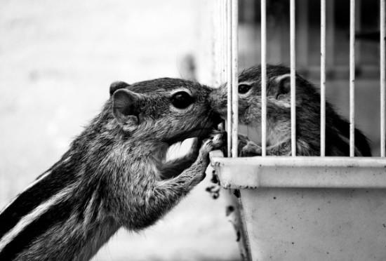 Mother Animal love