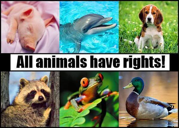 All Animals Have Rights