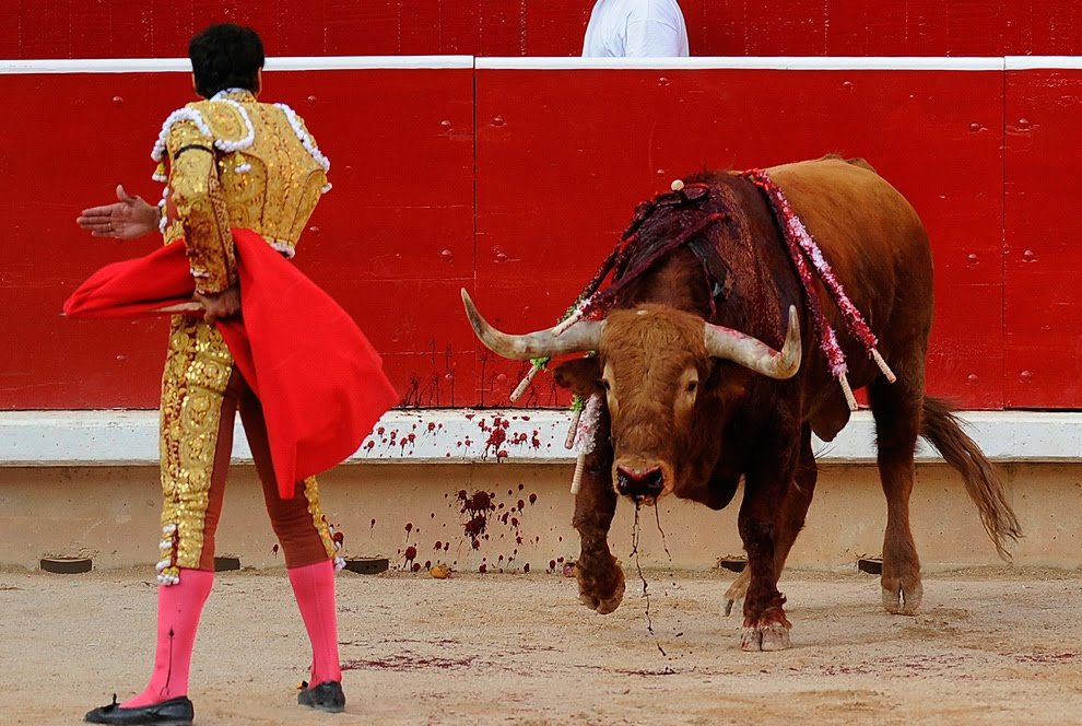 Animal Bullfighting