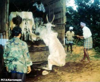 Animal-cruelty1