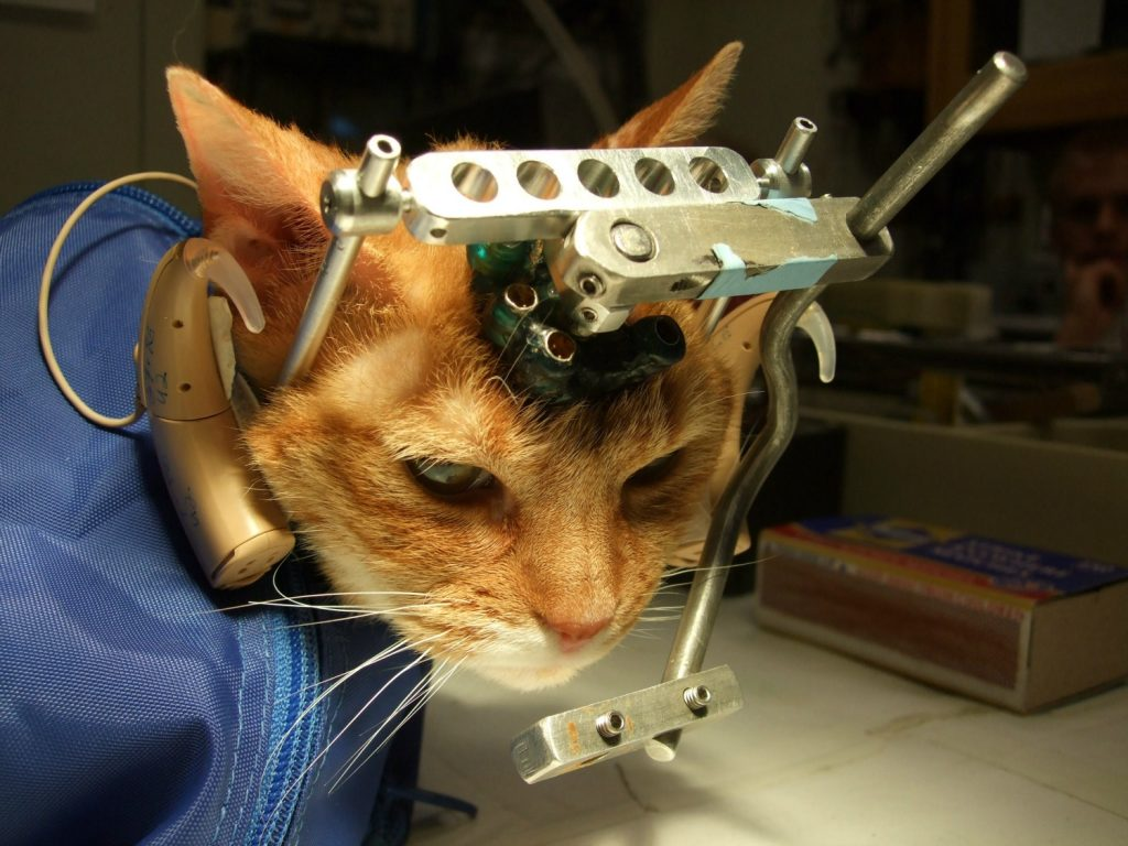 Cat Lab Testing