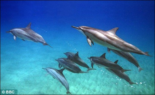Dolphins Family