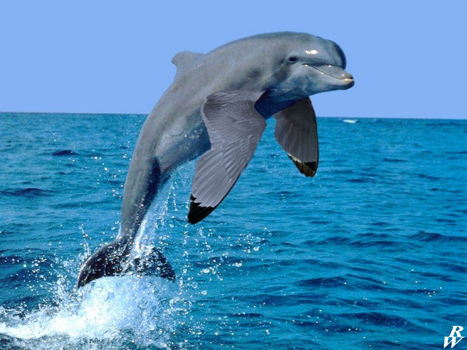 Flying Flipper
