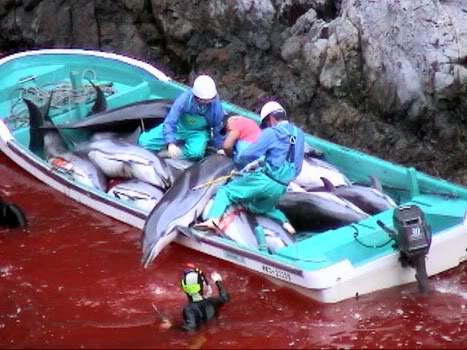 Hunting of dolphins in Japan