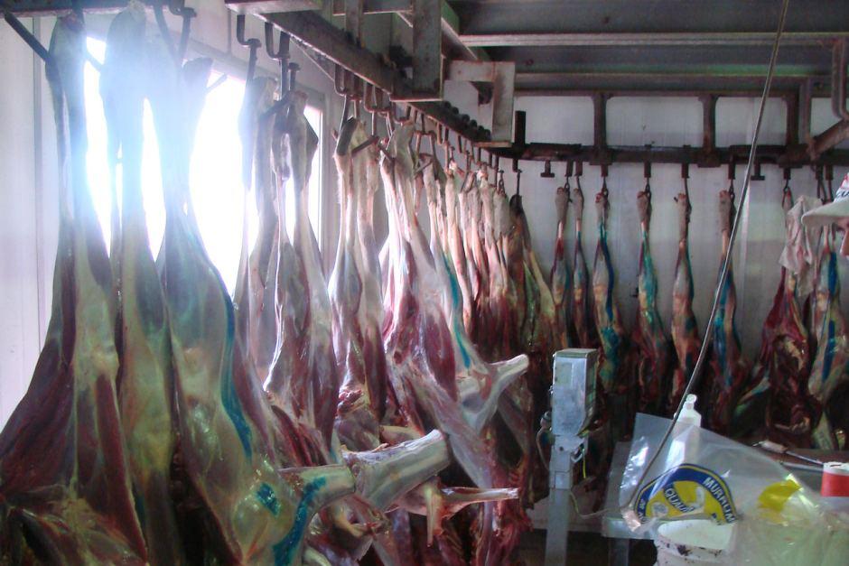 Kangaroo's Meat