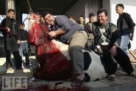 Killing Annocent Animal