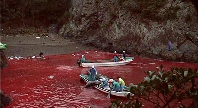 Killing Sea Animals