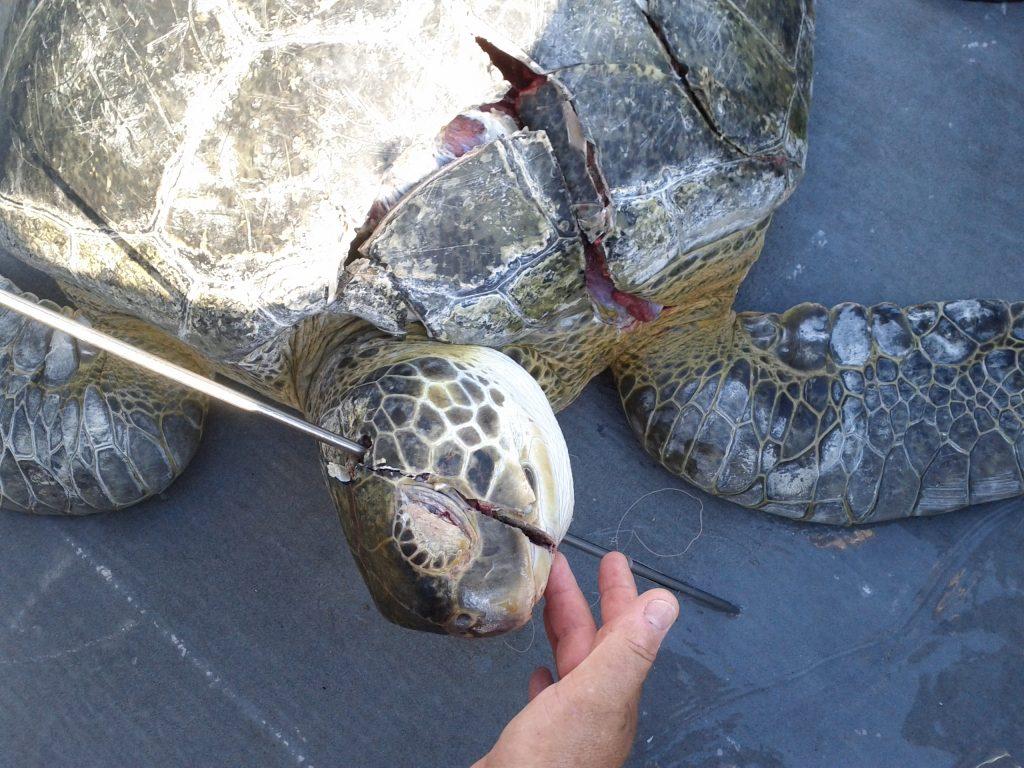 Killing Turtle