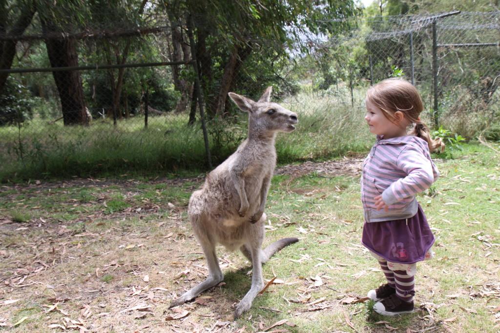 Love Kangaroo