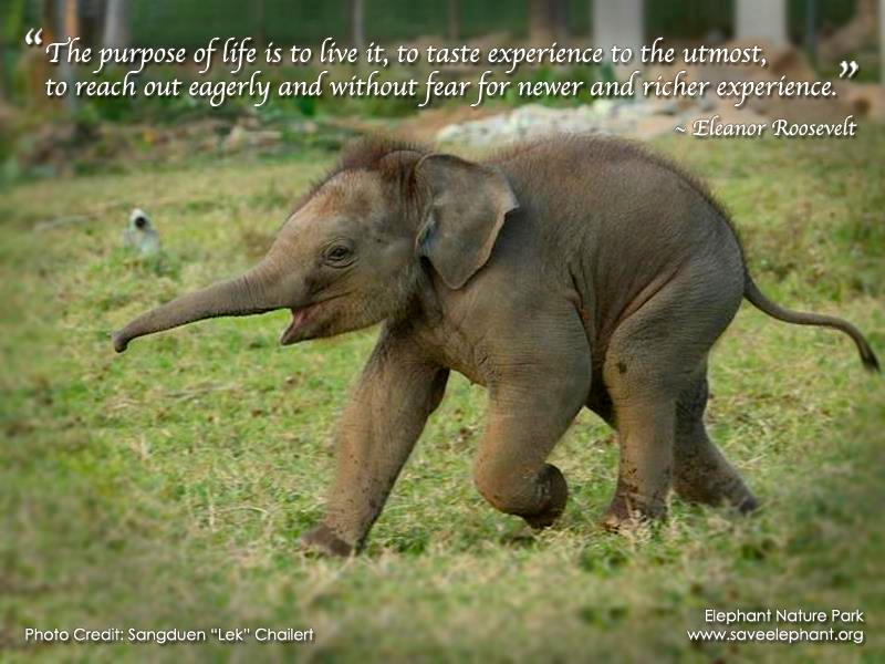 Save Elephnat