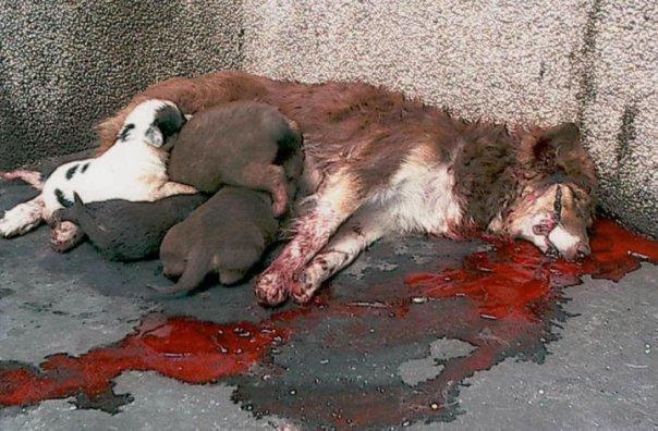 Animal Killing1