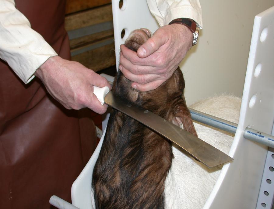 Animal Killing2