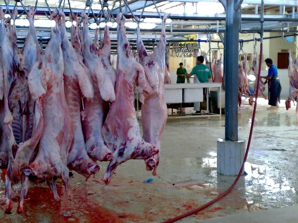Animal Killing6