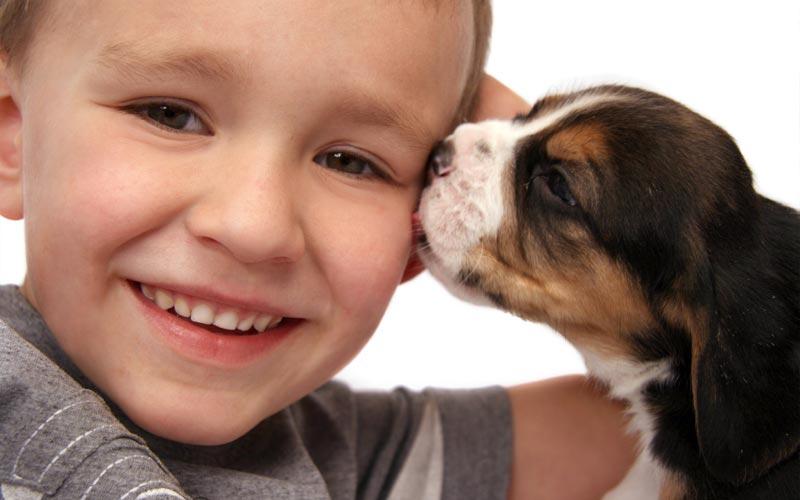 Animals's Love