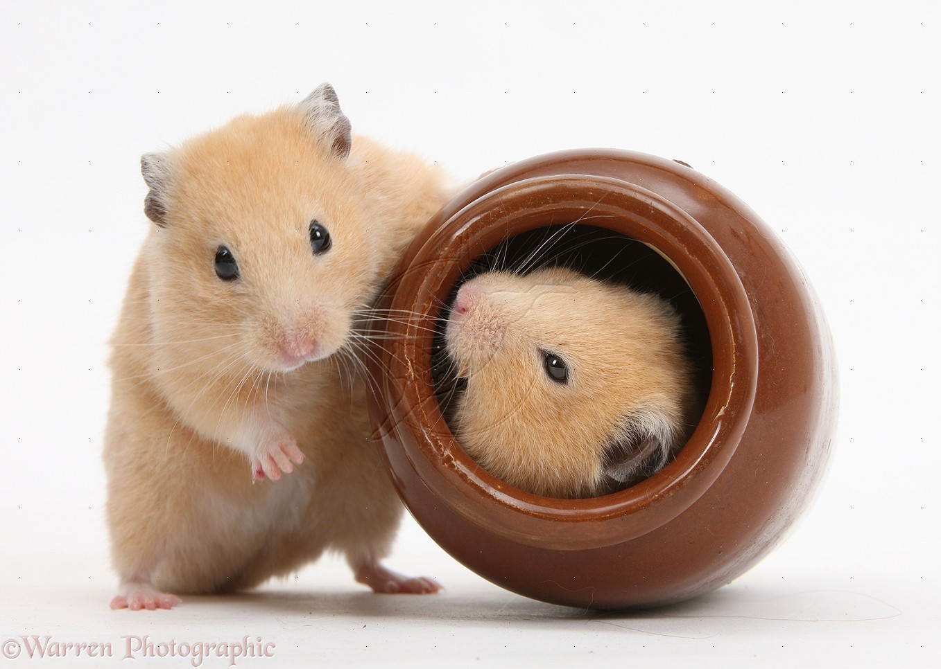 How to Keep a Hamster and a Dog