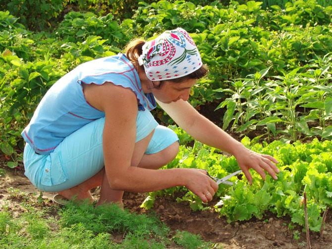 Grow Organic Garden
