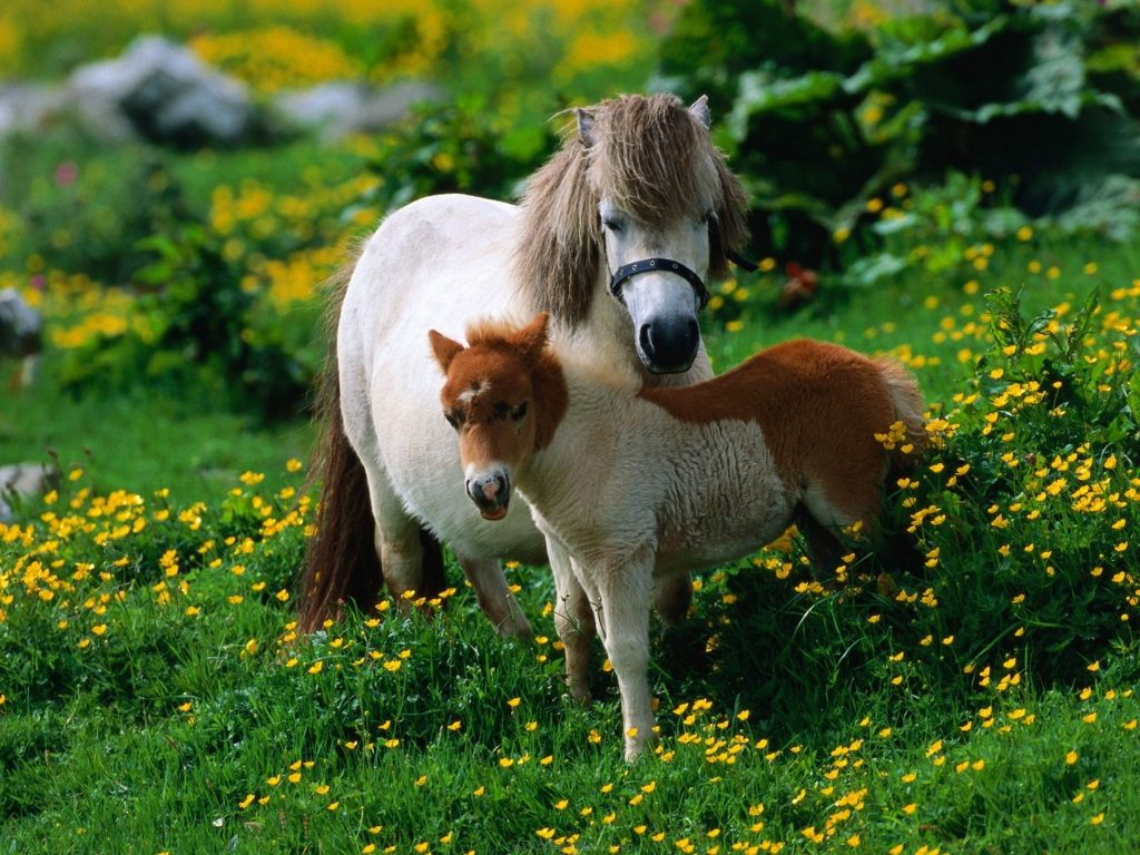 Horse-Pony-Animals