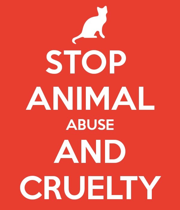 Stop cruelty to animals essay
