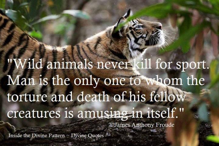 Stop Animal Hunting