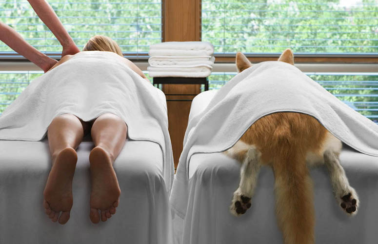 Good Dog Hotel And Spa