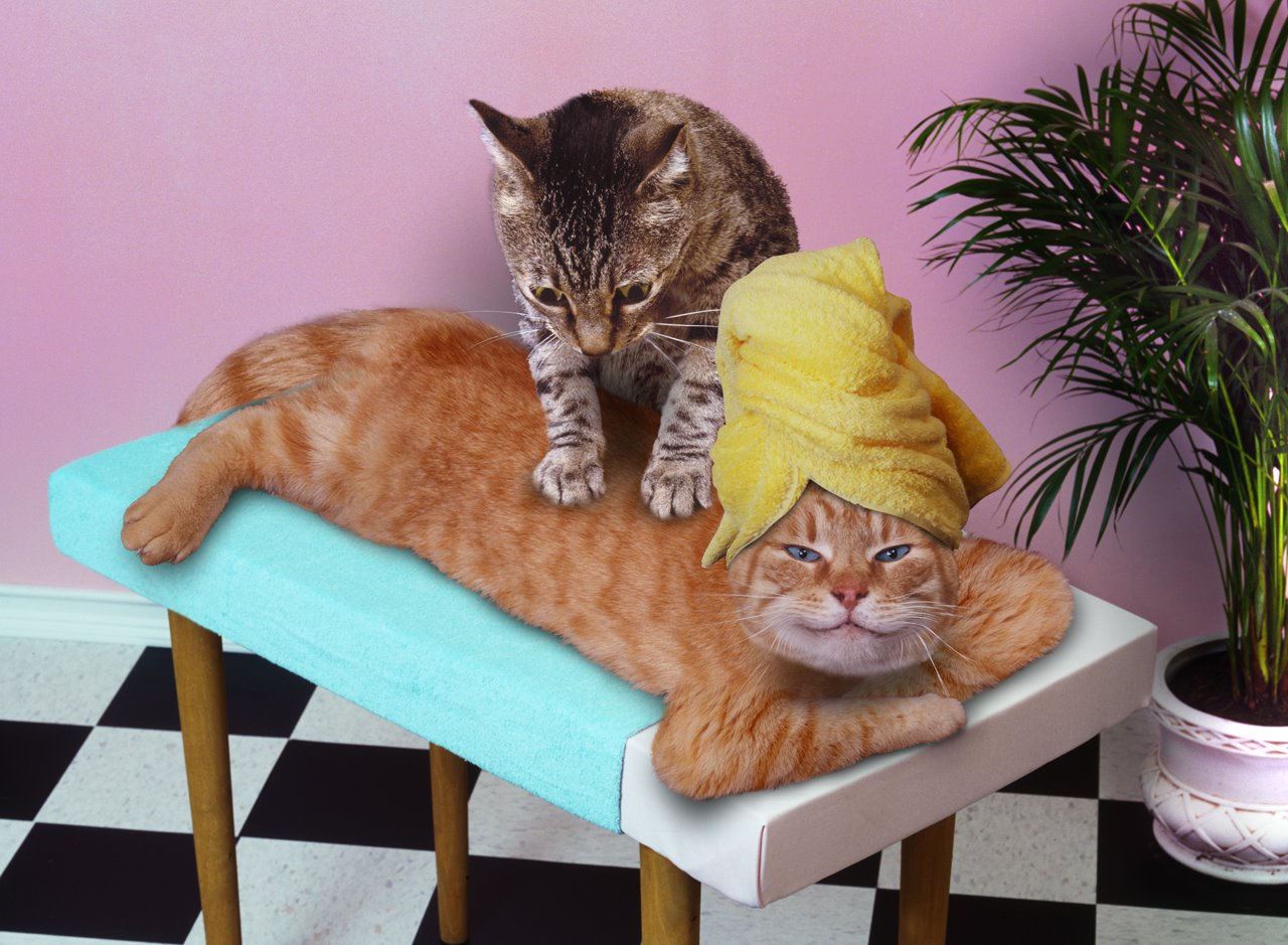 massage your pets and they ll love you more i lol at this