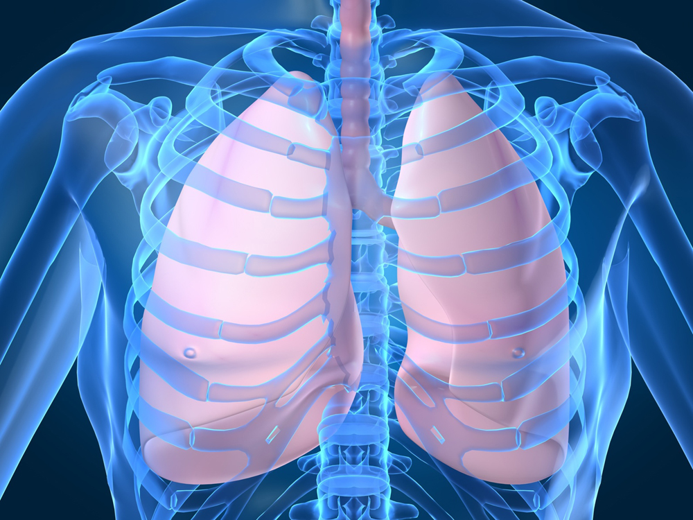Enhances the Respiratory System
