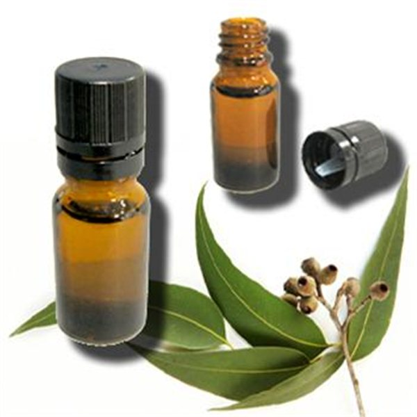 eucalyptus oil Alibabacom offers 943 eucalyptus oil bulk products about 81% of these are essential oil a wide variety of eucalyptus oil bulk options are.