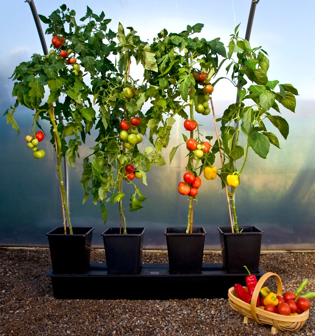 vegetables you can plant with small pots. even if you don't have, Natural flower