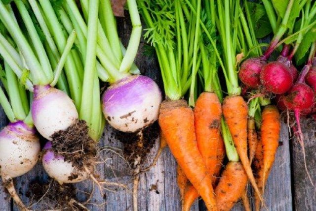 Turnips, Carrots, Beets
