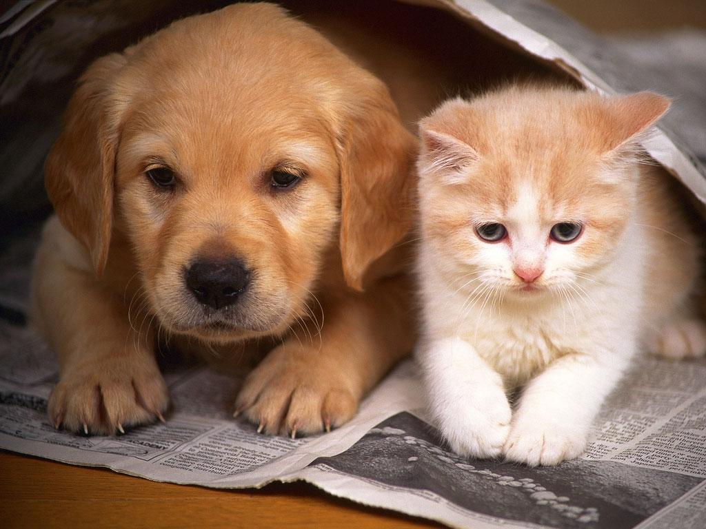 Adopt Animals