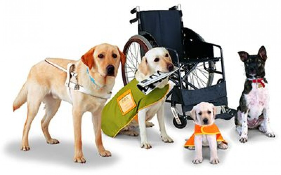 Charity for our four-legged friends