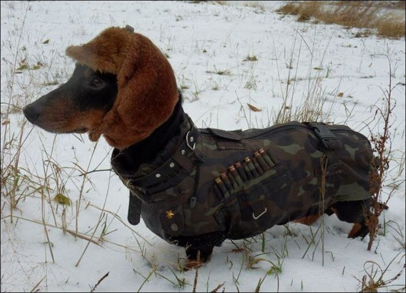 Top Outfit Army Adorable Dog - Cute-dog-pictures  Collection_474772  .jpg