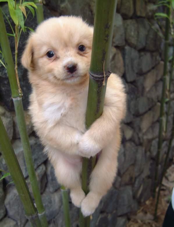 Cute Dog Smiling Cute Dog