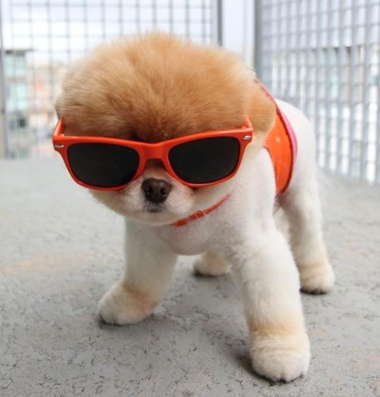 Funny-cute-dog