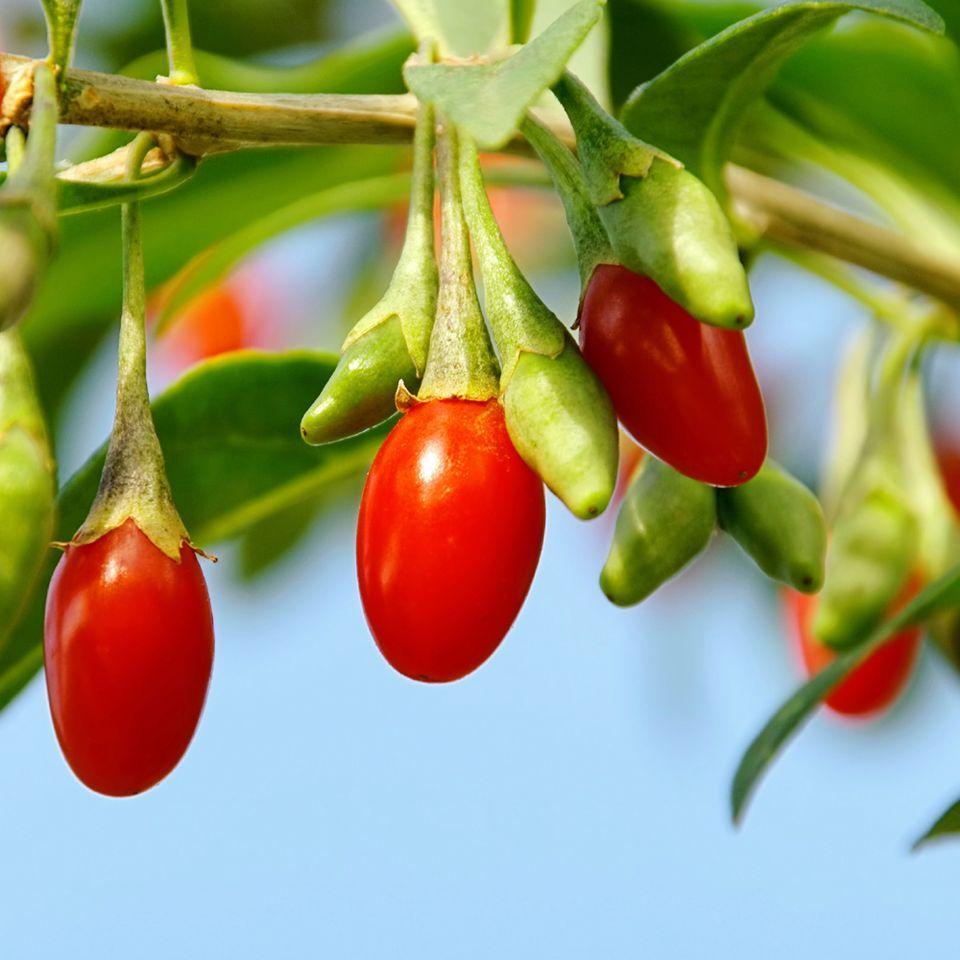 Naturals-Organic-Berries