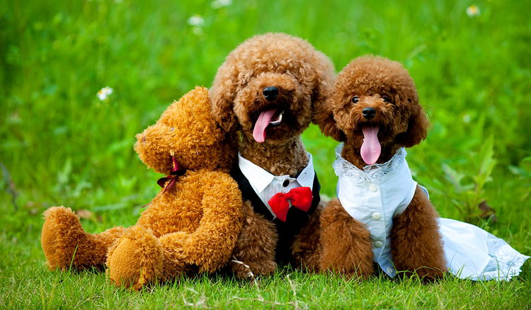The-romantic-story-of-cute-dogs