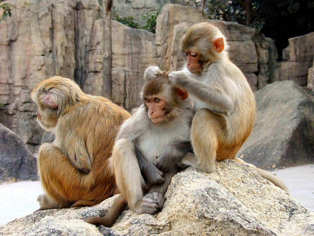 Florida-terrorized-monkeys-herpes
