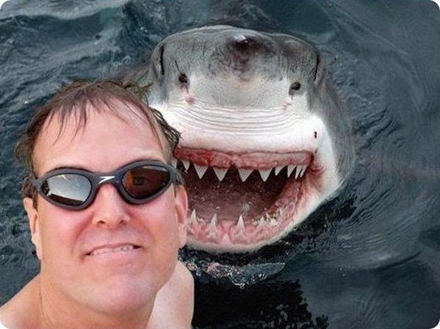 Happy-Go-Lucky Shark