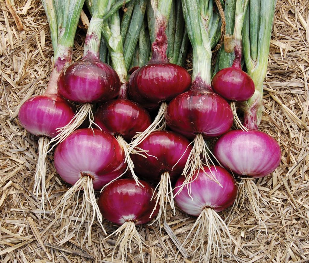 Heirloom-onion